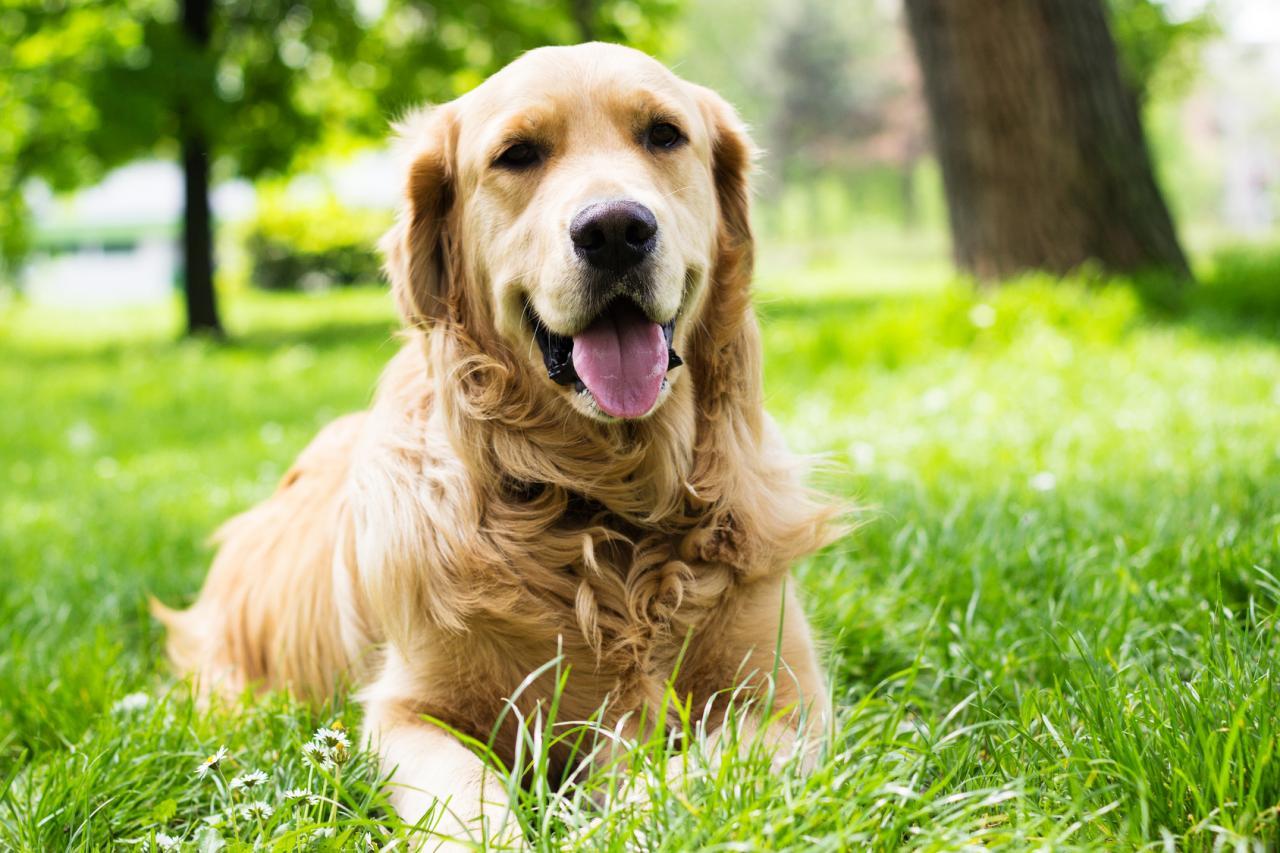 Vivre avec un chien ?